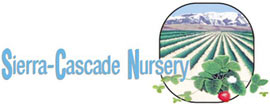 SierraCascade2 Sierra Cascade Nursery Standardizes on MobileFrames Mobile Application Platform